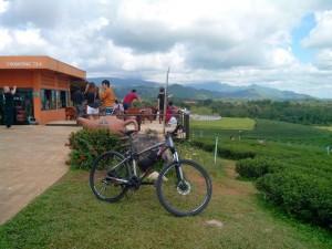 Perkebunan teh Choui Fong berada di dekat perbatasan Thailand-Myanmar. (Foto: Yussak Anugrah)
