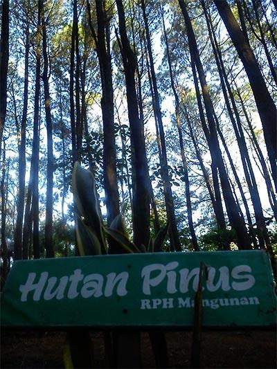 Papan nama di antara deretan pohon pinus. (Foto: Hadyan Rasyad)