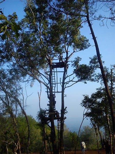 Menara Pandang di Hutan Pinus Mangunan.  (Foto: Hadyan Rasyad)